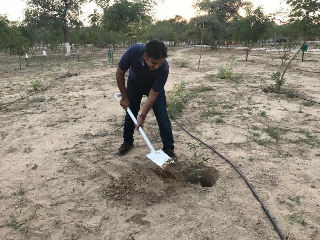 Plantation Activities